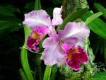 Orquídeas en el mayor humedal del Caribe.